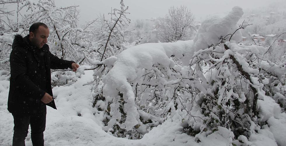 """Fındıkta """"kar yağışı"""" sevinci"""