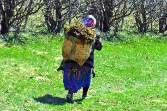 Karadeniz'in çalışkan kadınları