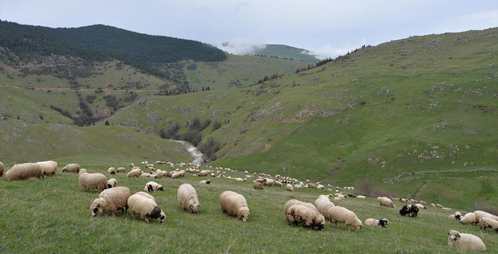 Fakıbaba '300 koyun' projesine açıklık getirdi