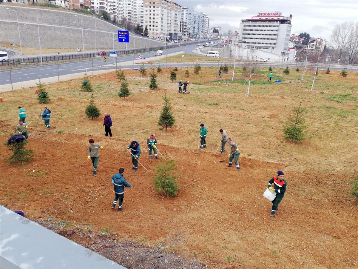 Trabzon'da ağaçlandırma çalışmaları