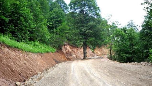 Trabzon'da asırlık ağaç kesilmekten kurtarıldı!