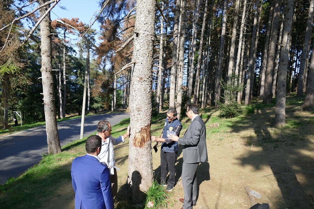 Atatürk Köşkü Ormanı'ndaki ağaçların neden kuruduğu araştırılıyor