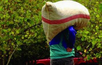 Arsin'de fındık hırsızlığı