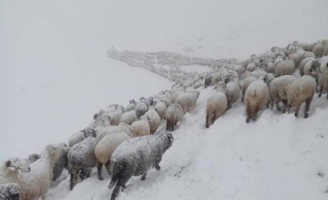 Trabzon'da yaylalardan göçe kar engeli