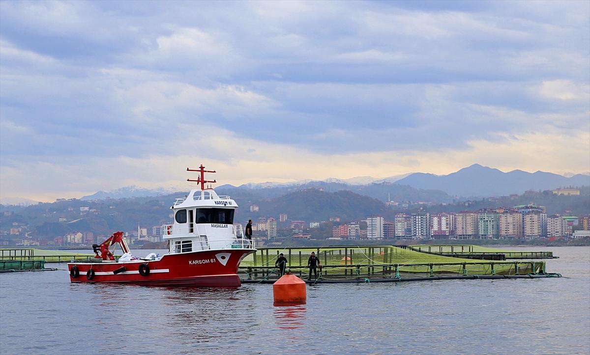 Trabzon'da yetiştirilen somon, Japon sofralarında