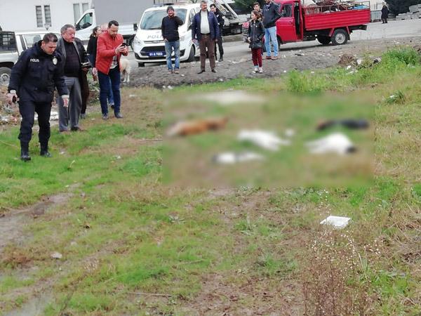 Trabzon'da sokak hayvanlarının öldürüldüğü iddiası