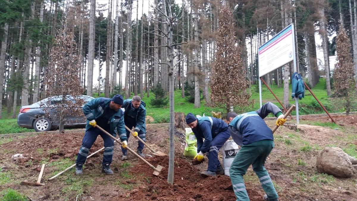 Atatürk Köşkü Ormanı'na yeni fidanlar dikildi