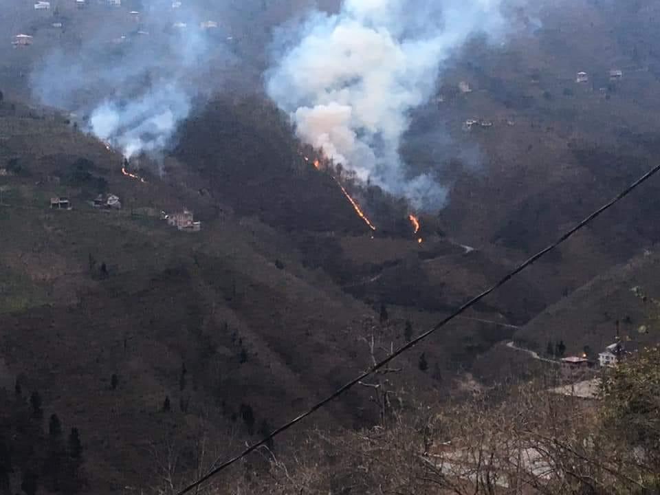 Trabzon'daki orman yangınlarında son durum! Nerelerde devam ediyor!