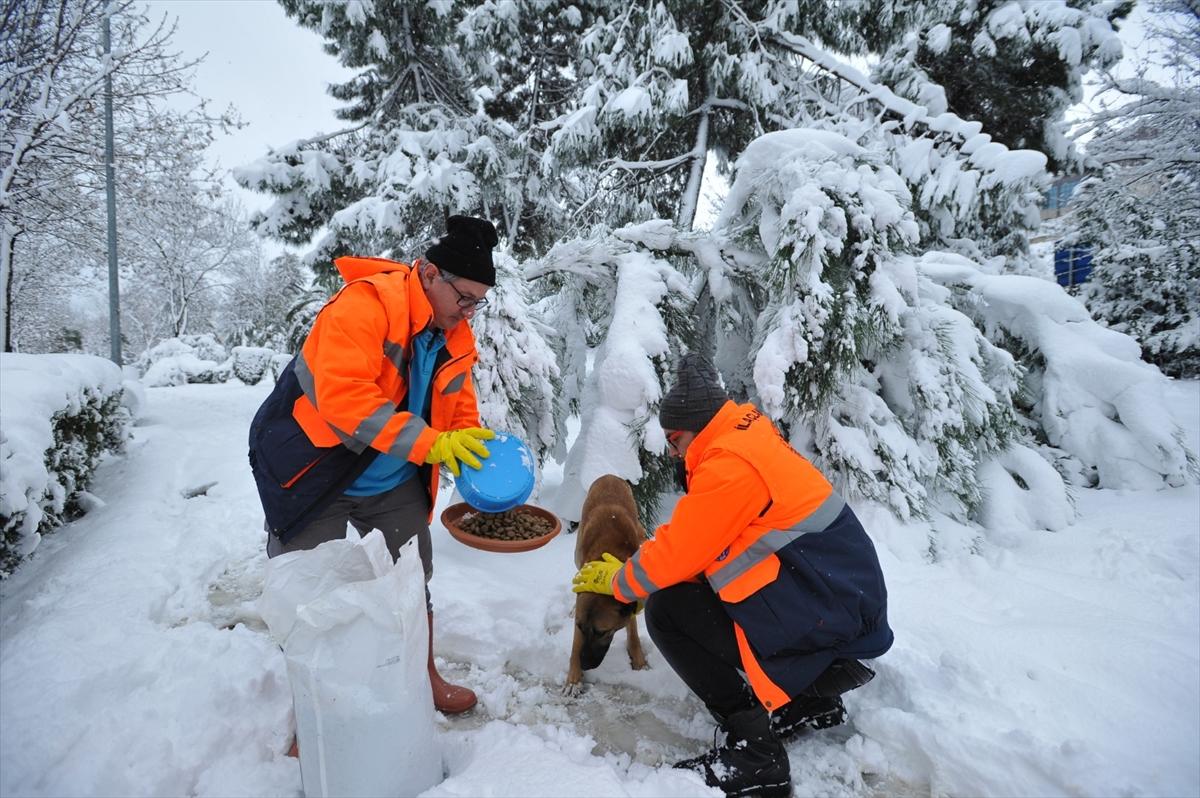 Trabzon Büyükşehir Belediyesi sokak hayvanları için yem dağıttı