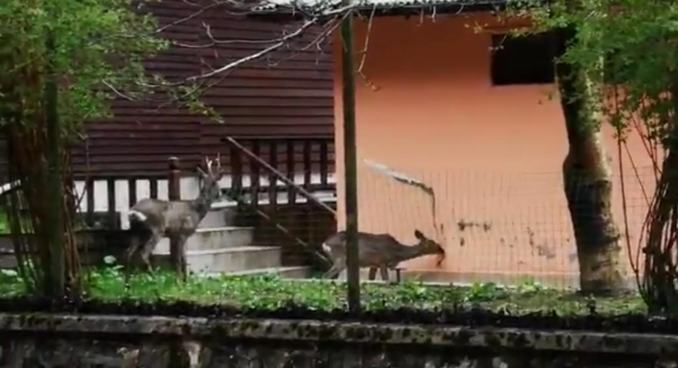 Turizm merkezi Uzungöl yaban hayvanlarına kaldı
