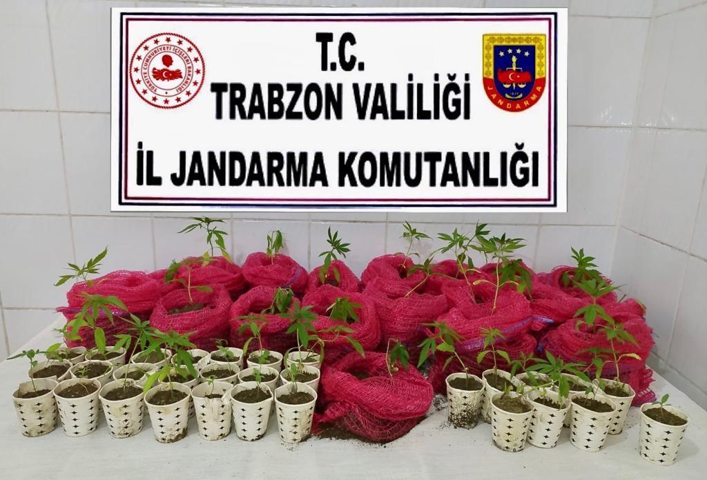 Trabzon'da kenevir ve kurusıkı tabanca ele geçirildi