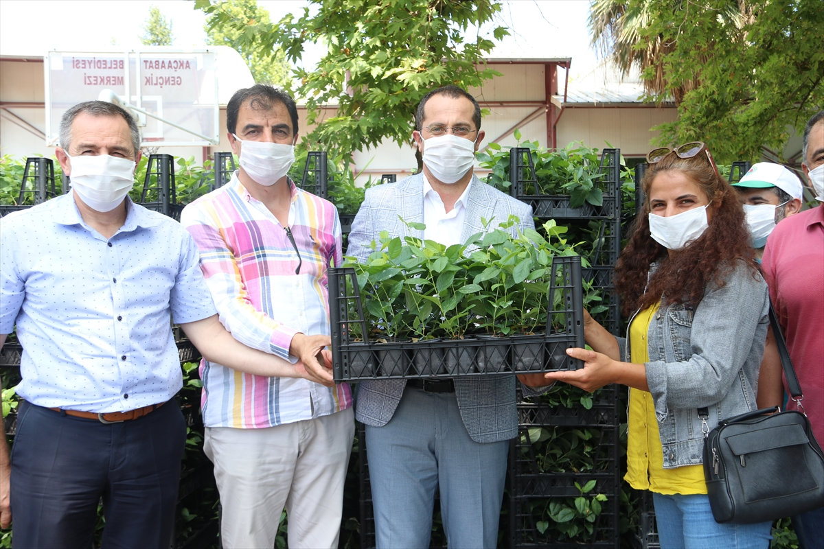 Akçaabat'ta alternatif tarım ürünlerinin geliştirilmesi çalışmaları