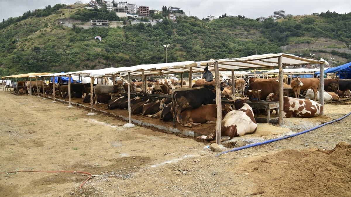 Trabzon'da kurban satış alanlarında Kovid-19 tedbirleri alındı