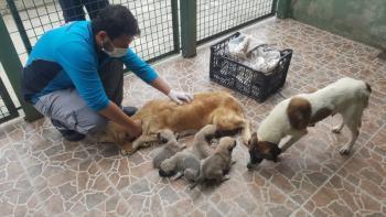 Trabzon'da anneleri ölen 4 köpek yavrusu koruma altına alındı