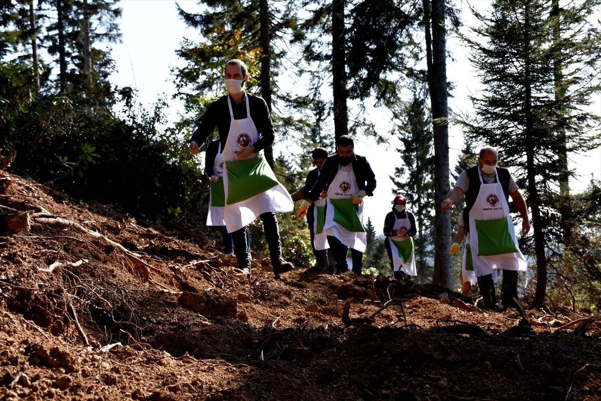 Kadıralak Yaylası'nda 120 yıllık ağaçlardan orman gençleştirme çalışmaları yapıldı