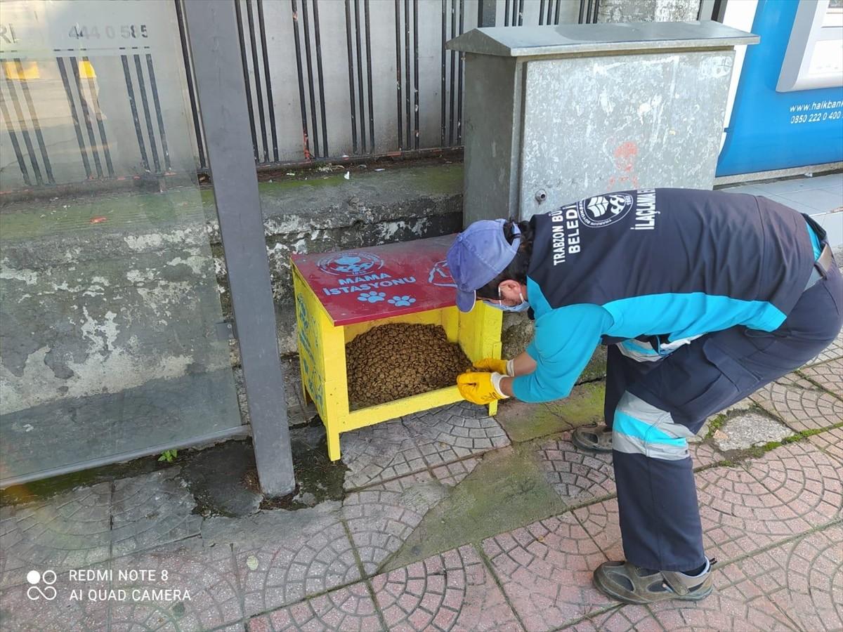 Trabzon'da sokak hayvanları için mama bırakıldı