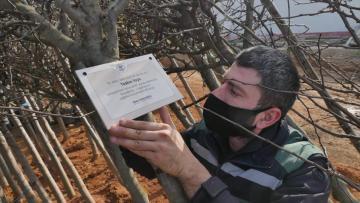 Trabzon'da 2020'de dünyaya gelen her bebek için bir ağaç
