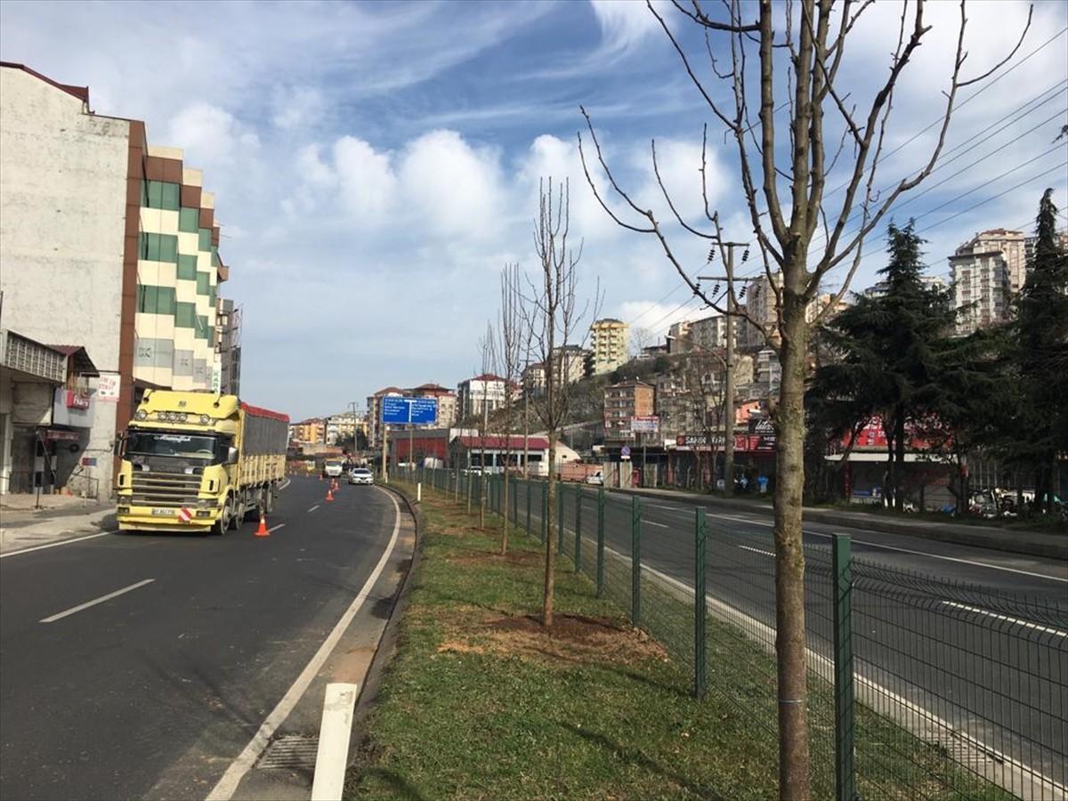 Trabzon Büyükşehir Belediyesinin çiçek ve fidan dikim çalışmaları sürüyor