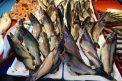Karadeniz somonu yılın ilk iki ayında 30 ülkeye ihraç edildi
