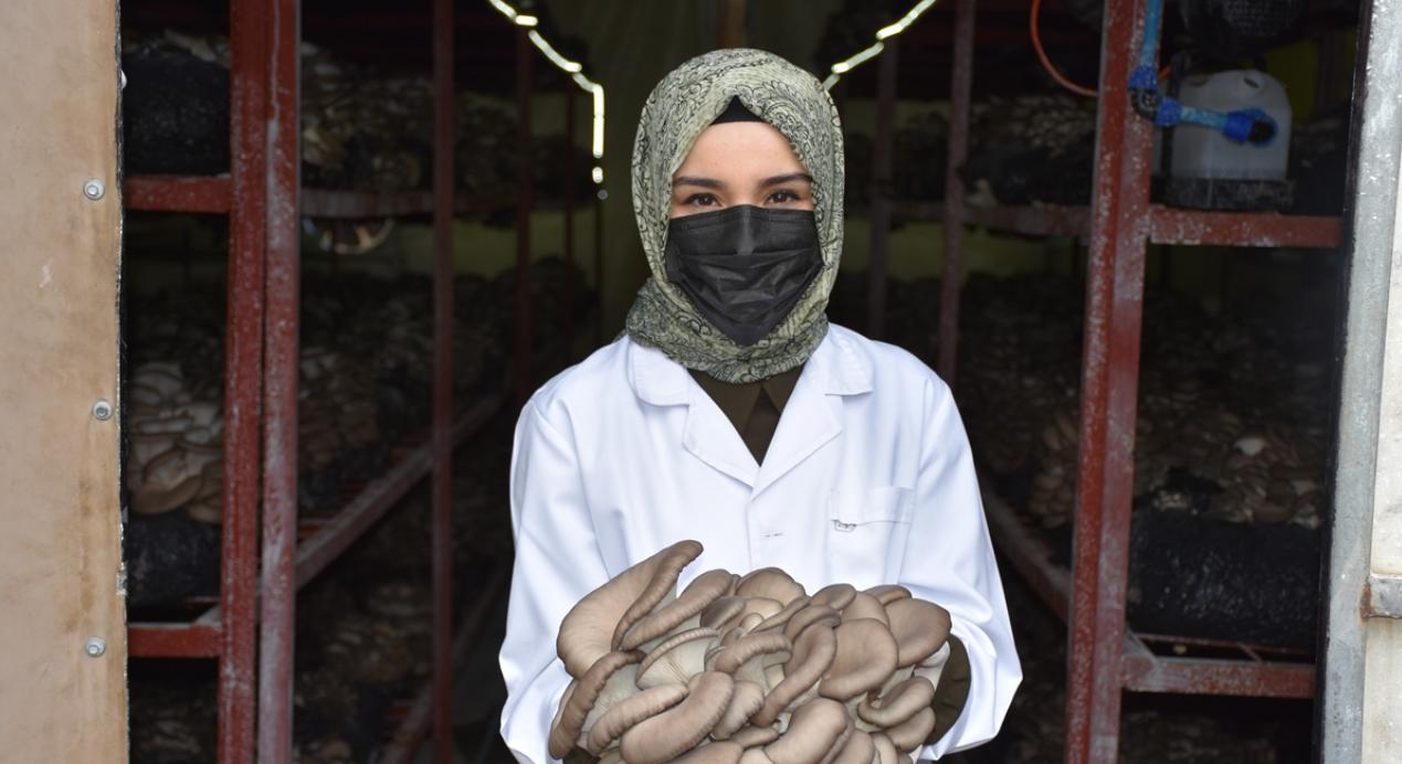 Yıllık 30 ton istiridye mantarı üreten harita mühendisi genç kadın, mesleğini bırakıp üretici oldu