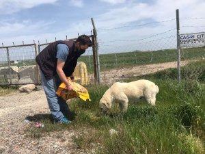 """Trabzon'da """"tam kapanma"""" sürecinde sokak hayvanları unutulmuyor"""