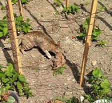 Boruya sıkışan yavru kediyi itfaiye ekipleri kurtardı