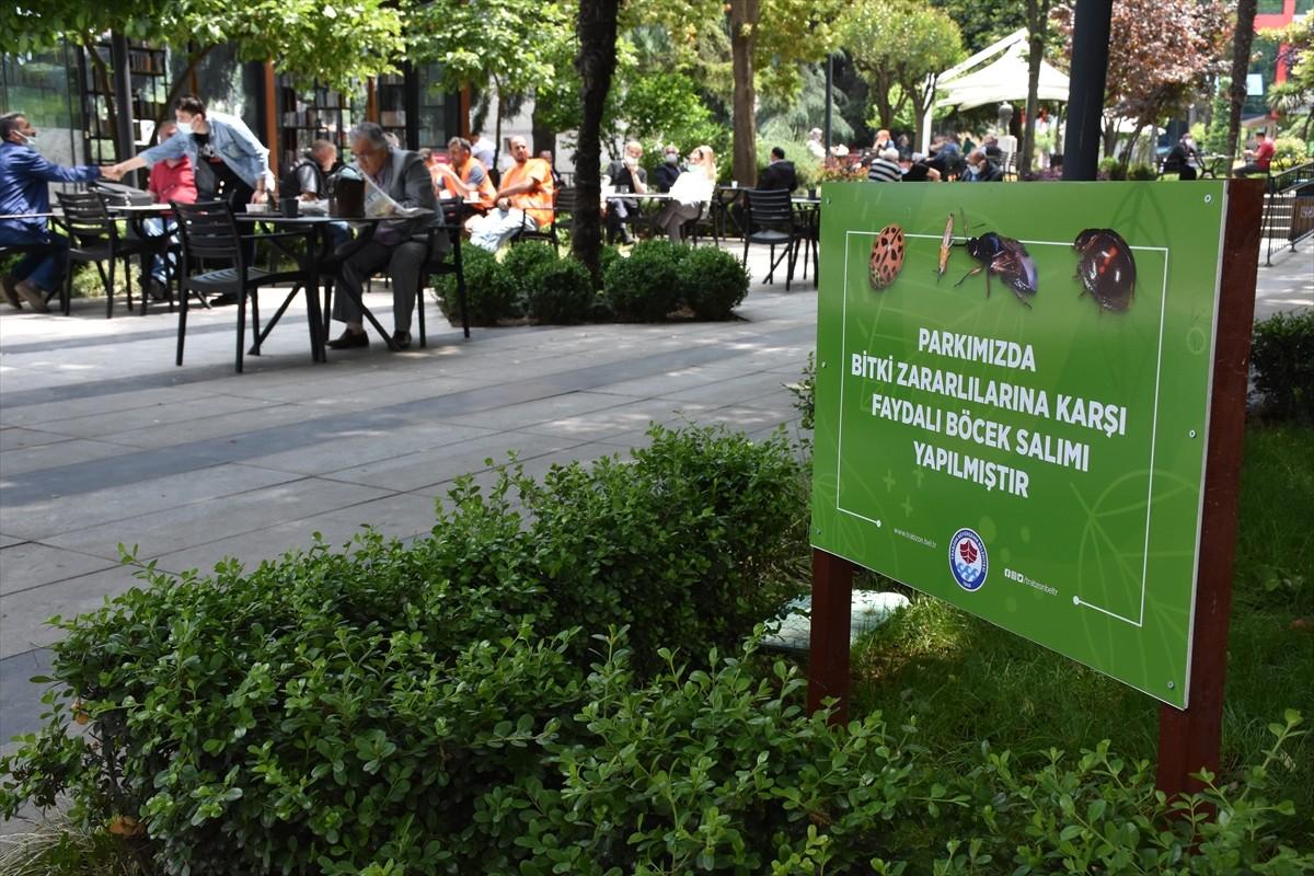 Trabzon'daki parklar zararlılardan biyolojik mücadeleyle korunacak